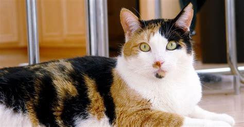 Kandang Kucing Fiber harga kandang kucing yang baik harga yos