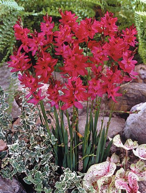 flower garden by bunting flower garden by bunting garden ideas