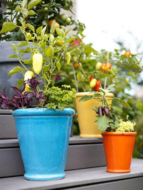 How to Make Kitchen Garden in Pots   Container Kitchen Garden