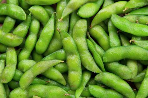can dogs edamame can dogs eat edamame ultimate home