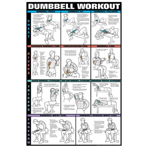 chart series ii dumbell exercise chest biceps triceps
