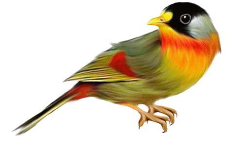 varias imagenes background css zoom dise 209 o y fotografia aves p 225 jaros con fondo