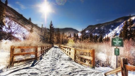 forest trees sunlight snow mountains fence colorado