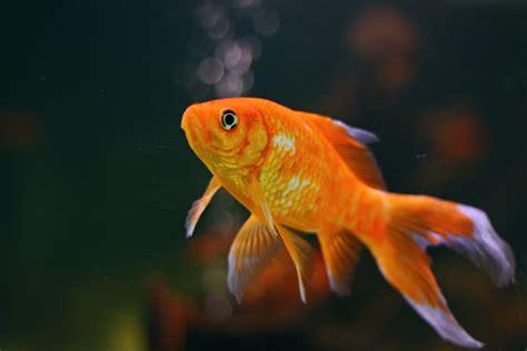 alimenti con probiotici pesce probiotico