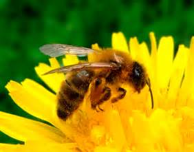 des abeilles en ville c est l association