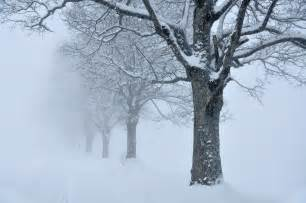 file trees snow fog sk jpg wikimedia commons