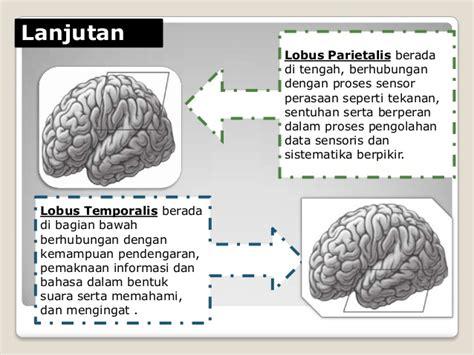 Lu Tidur Sensor power point kelompok otak secara umum