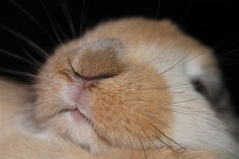 Nose Sleepers by That So And Posts On
