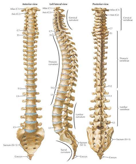 diagram spine spine diagram jpg 648 215 778 works