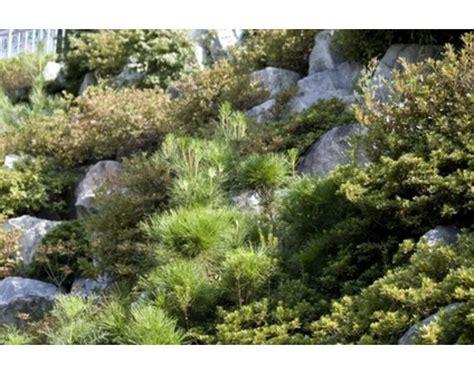 78 Images About Drought Tolerant Rock Garden Plants On Rock Garden Plants Sun