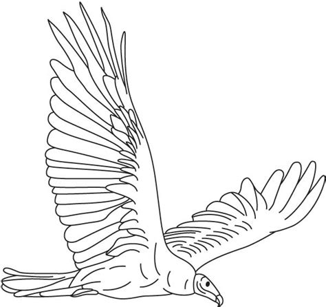 turkey vulture coloring page world new world new world