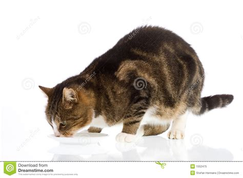 Cat Dreams Of Fish Birds Milk by Cat Milk 1 Royalty Free Stock Photo Image 1552475