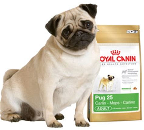 royal canin pug food free bag of royal canin pug from dogster all