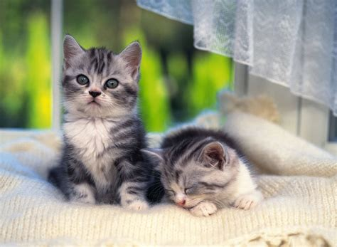 kitten wallpaper for pc cute kittens hd wallpapers high definition free