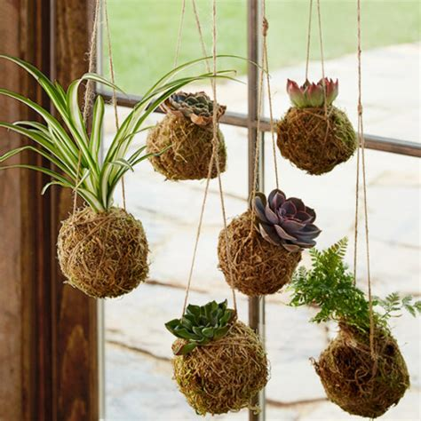 Home Decor Balls by Kokedama Hanging String Gardens Vivaterra