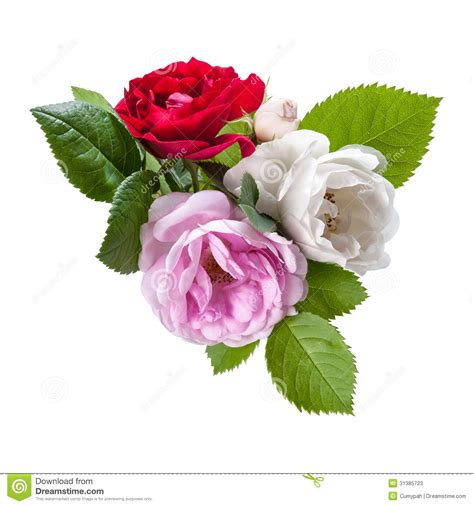 red white and pink roses pictures to pin on pinterest red white and pink rose flowers stock image image 31385723