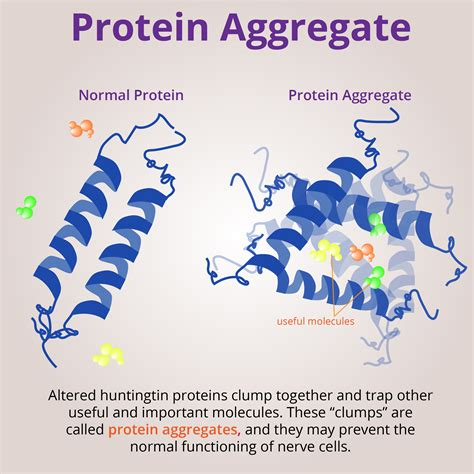 protein aggregation prion like behavior in the huntingtin protein hopes
