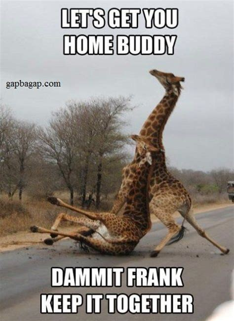 Drunk Friend Memes - best 25 drunk memes ideas on pinterest drunk humor