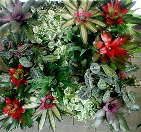 Home Decor Plants Vertical Green Walls Living Walls Of Indoor Plants Plant