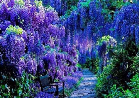 Wisteria Gardens by Best 118 Wisteria Fall Images On Gardening