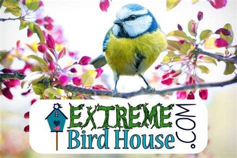 home garden extreme birdhouse good morning flowers