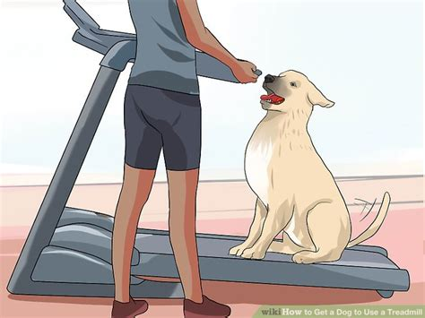how to a to use a treadmill how to get a to use a treadmill 10 steps with pictures