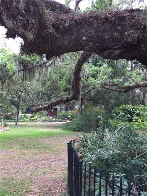 Sugar Mill Botanical Gardens Dunlawton Sugar Mill Gardens Picture Of Dunlawton Sugar Mill Gardens Port Orange Tripadvisor