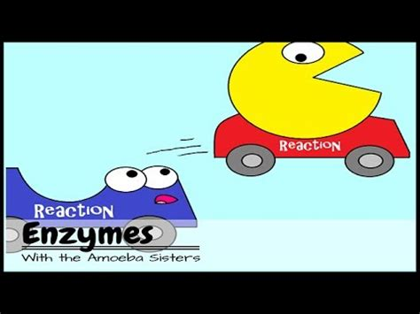 enzymes andpac man youtube