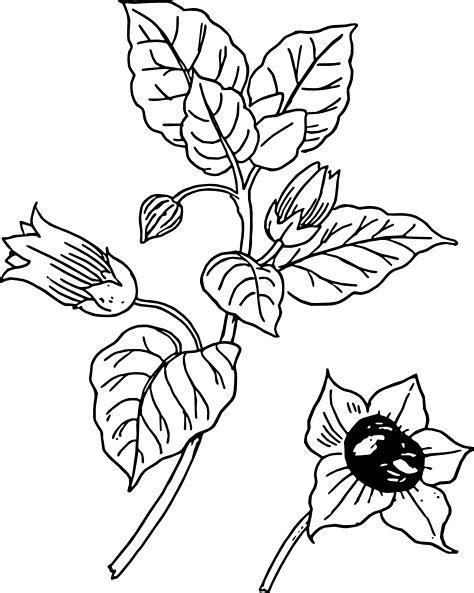 belladonna clip art   svg   vector