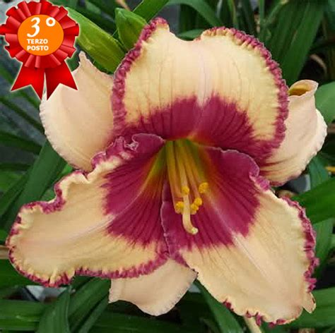 foto fiori piu belli mondo vota il fiore eletti i 3 pi 249 belli con sorpresa fiori