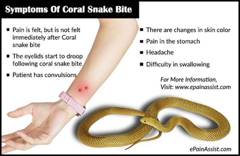 snake bite symptoms snake bite symptoms aid treatment prognosis prevention