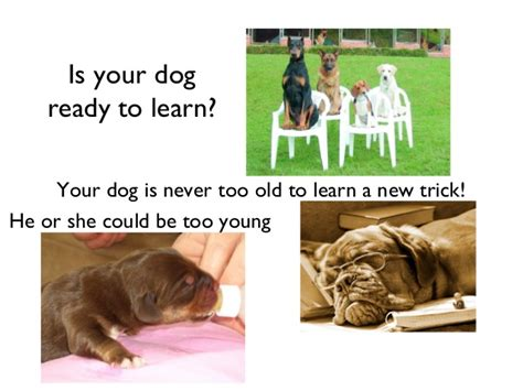 how to house break your dog how to train your dog 2