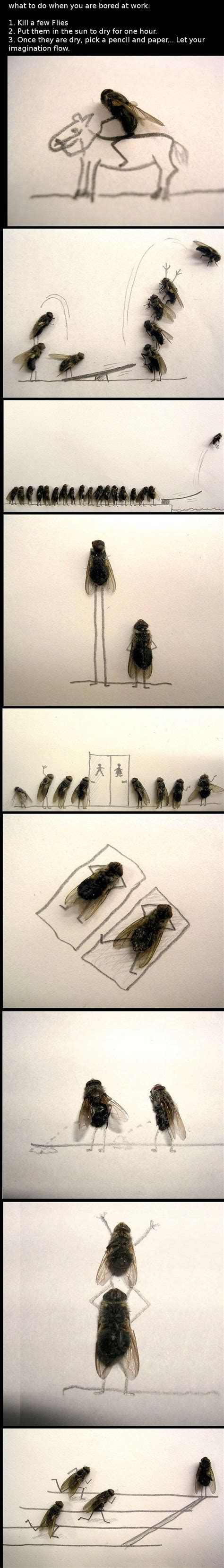 Bored How About Few by What To Do When You Are Bored At Work 1 Kill A Few Flies2