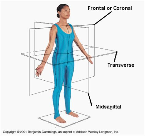 body planes and sections samanthas anatomy blog body regions