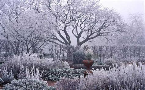 Winter Garden by 5 Tips To Creating The Winter Garden