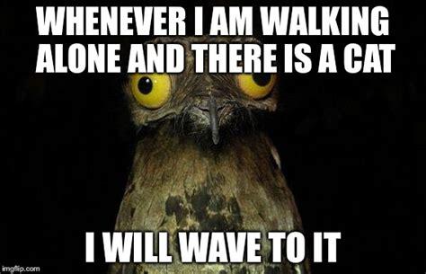 Potoo Bird Meme - potoo meme 28 images the potoo nature s most surprised