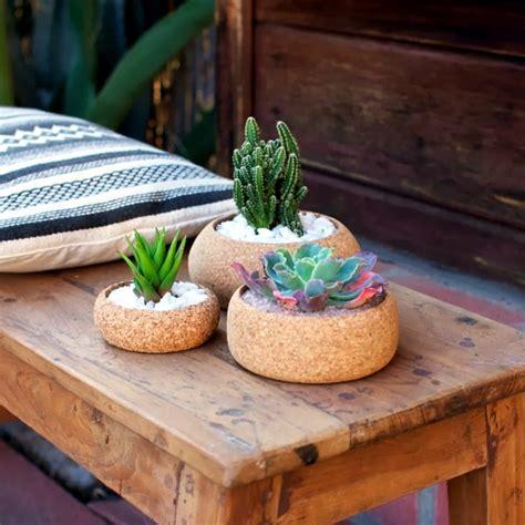 pots cork ideal  cactus  succulents interior design ideas ofdesign
