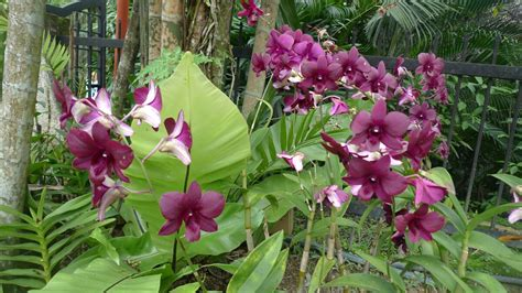Orchid Garden by Kuala Lumpur Orchid Gardens Eat Code See