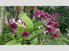 Kuala Lumpur – Orchid gardens | eat code see Kutai