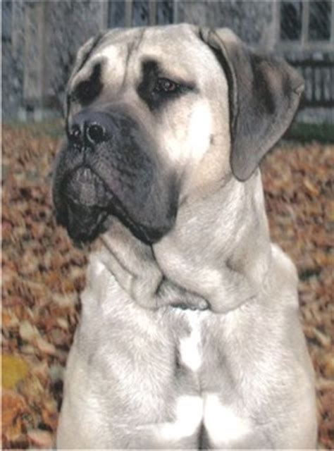 sandlot breed what breed of was in the sandlot breeds picture