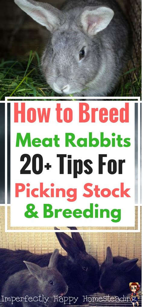 raising meat rabbits your backyard best 25 meat rabbits ideas on pinterest