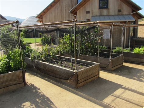 More Ideas For Raised Vegetable Garden Beds Protect From Netting For Vegetable Gardens