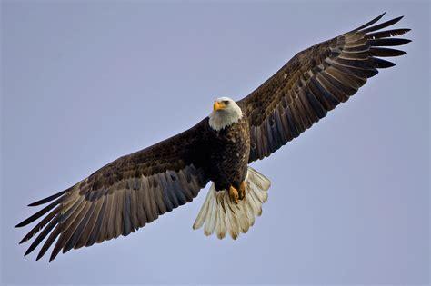 motor inn bc squamish eagle squamish accommodations