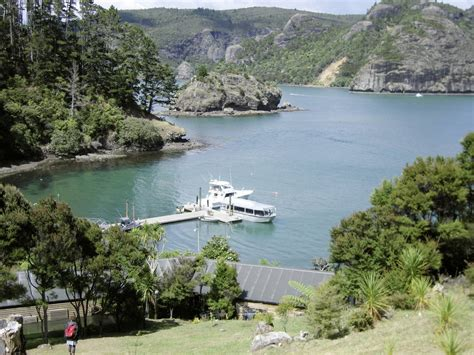 clairvoyant and present danger a bay island psychic mystery books new zealand no hurries auckland christchurch tenzing