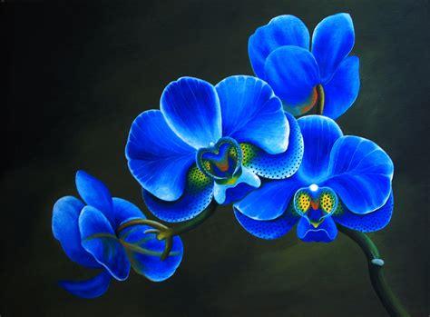 blue orchid blue orchids flowers
