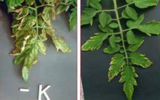 jenis defisiensi  ciri ciri daun tanaman kekurangan