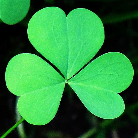 getting over a three leaf clover that i thought was four