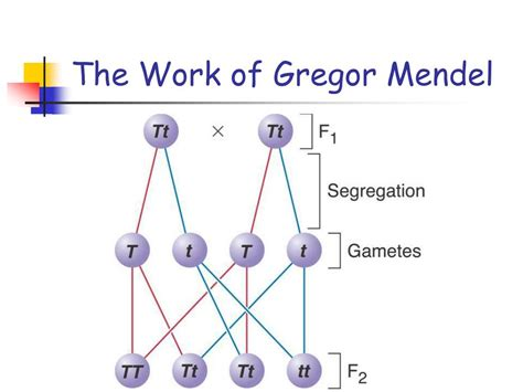 section 11 1 the work of gregor mendel answers section 11 the work of gregor mendel 11 1 the work of