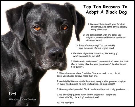 Top 10 Reasons To Adopt A by Top 10 Reasons Why To Adopt A Black I