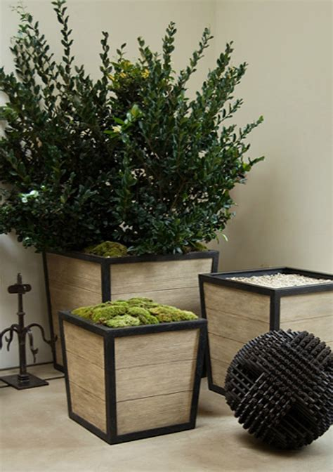Boxwoods In Planters by 1000 Ideas About Boxwood Planters On Large